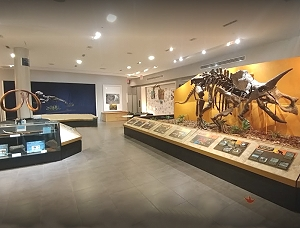 palm beach museum of natural history - west palm beach attractions
