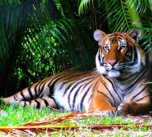 Palm Beach Zoo, West Palm Beach Attractions