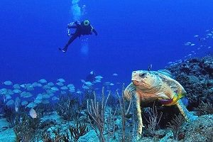 west palm beach scuba